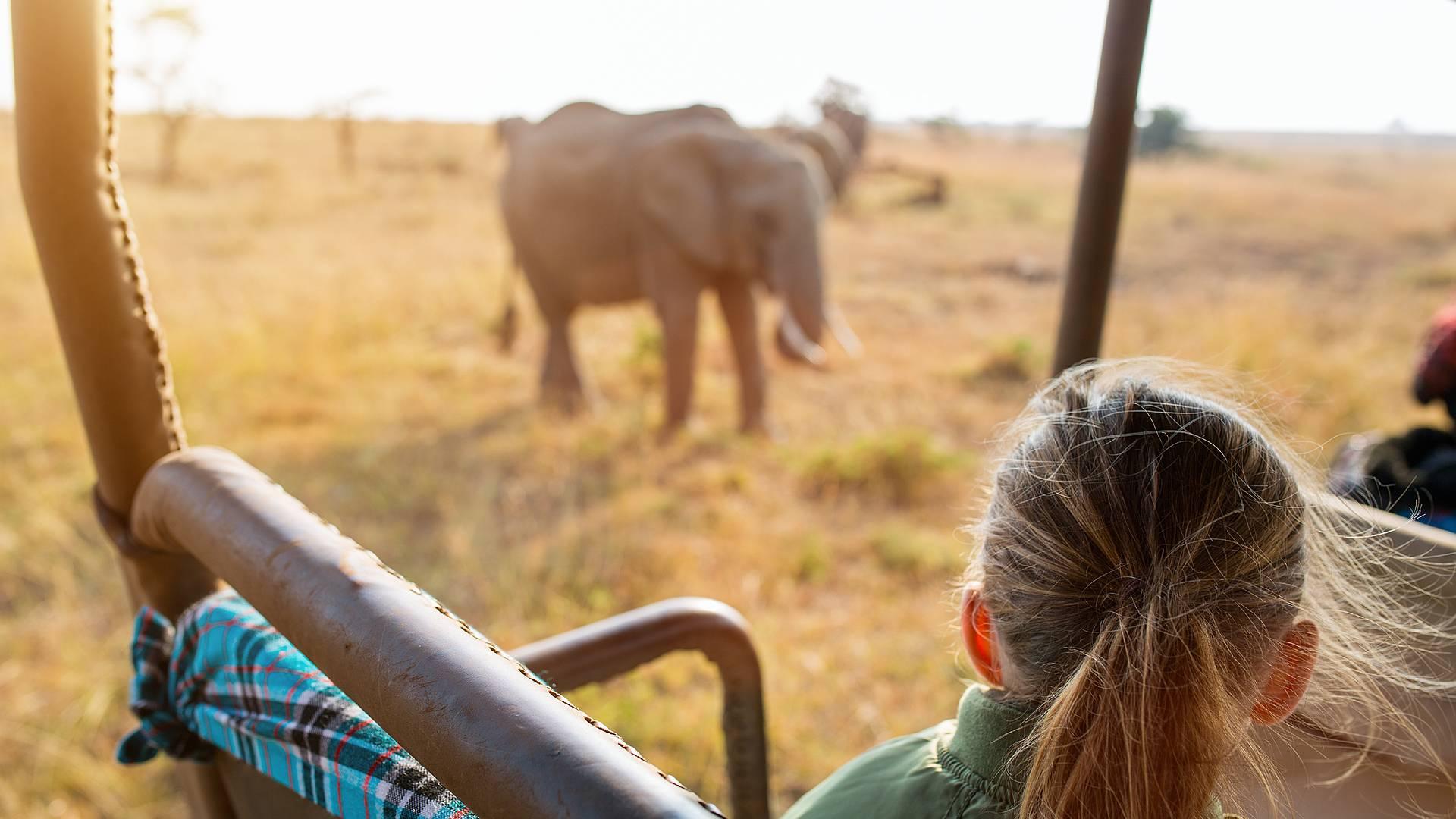 Tour d'horizon : Kruger, Le Cap et la route des jardins