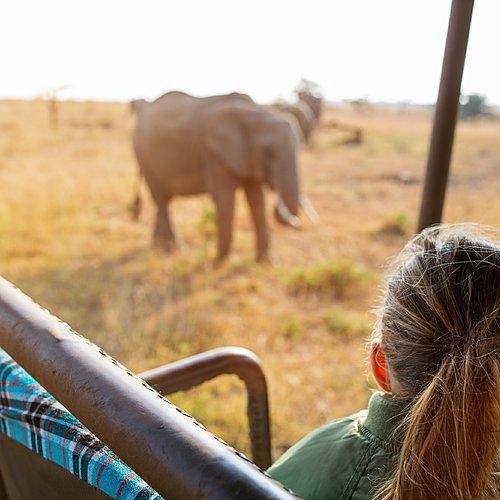 Tour d'horizon : Kruger, Le Cap et la route des jardins -