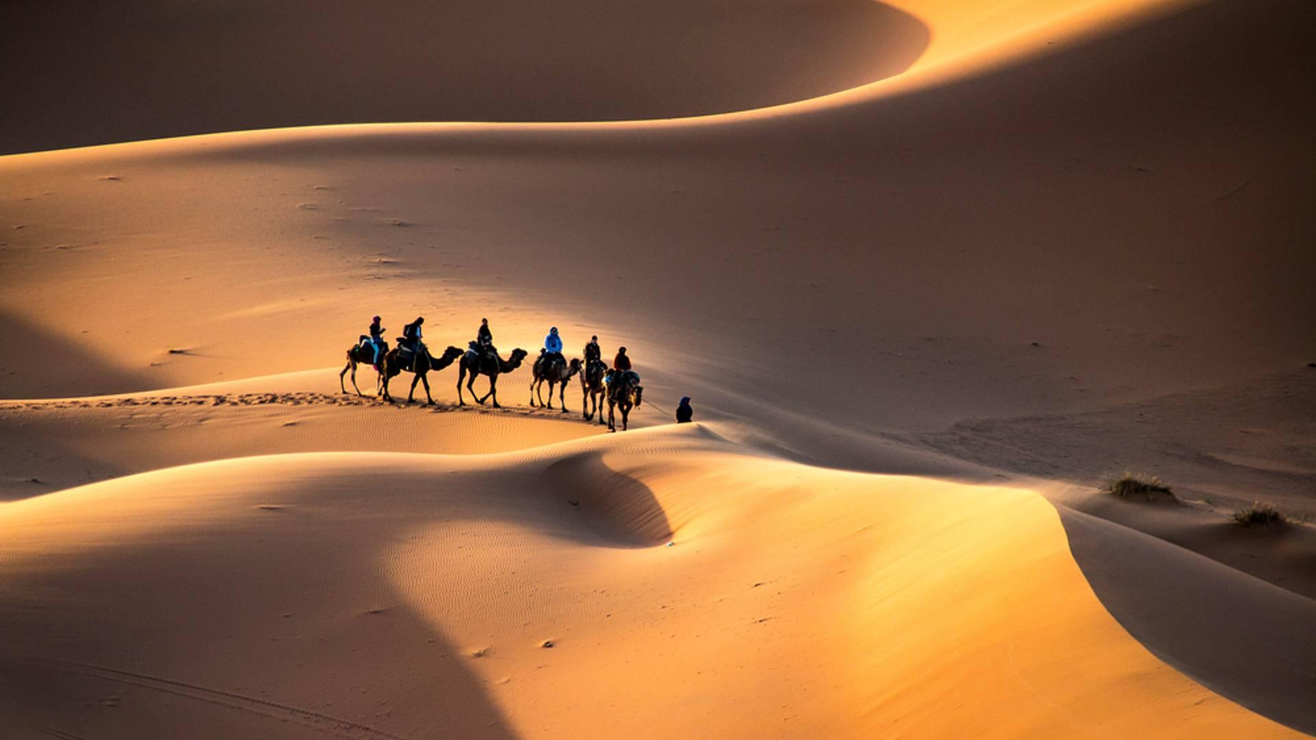 Le désert , terre des contrastes ...