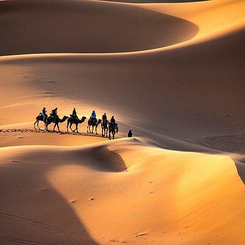 Le désert , terre des contrastes ... - Marrakech -