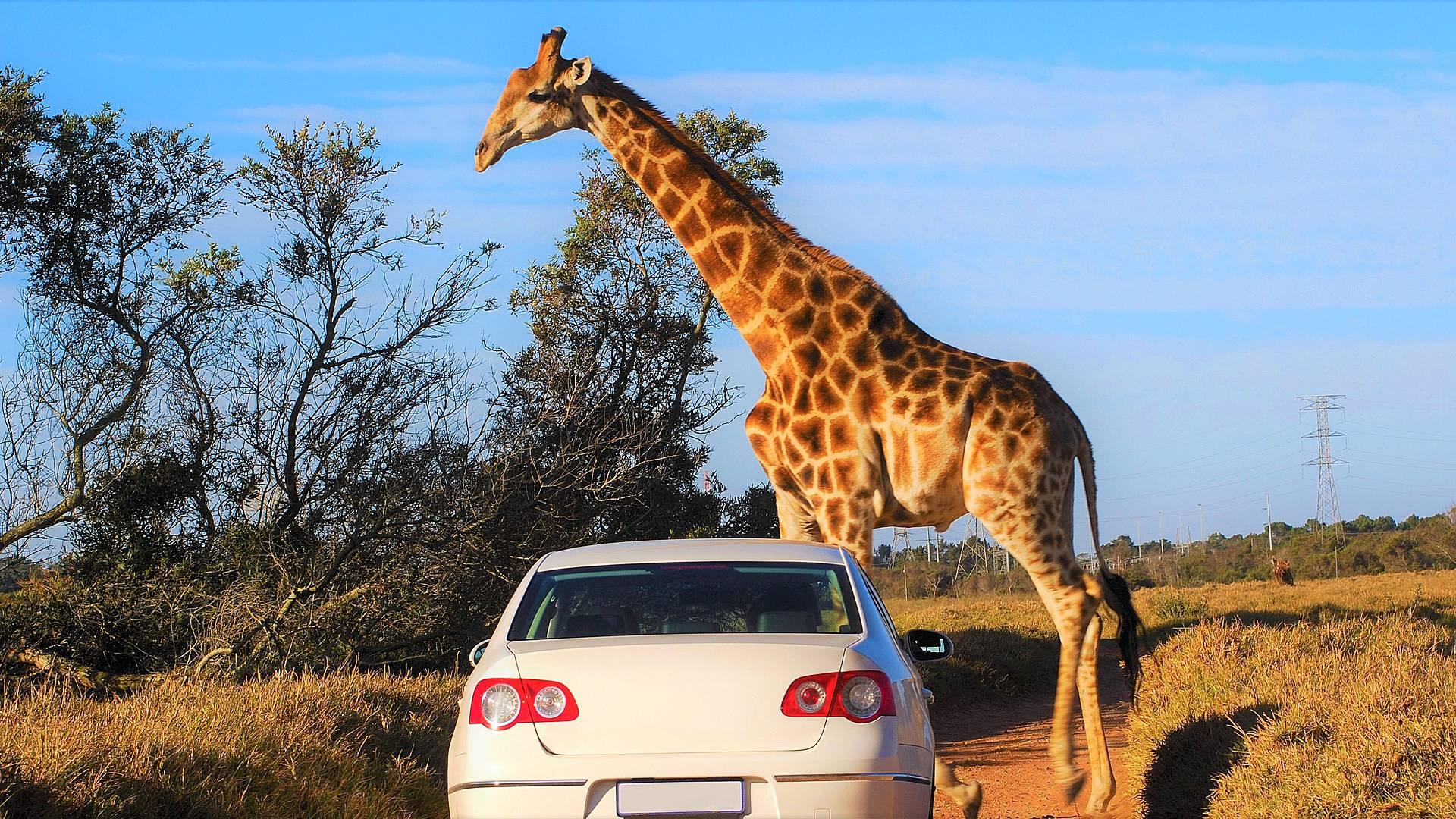 Ciudad del Cabo, la Ruta Jardín y Amakhala Game Reserve