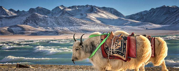 Discovering Mysterious Tibet