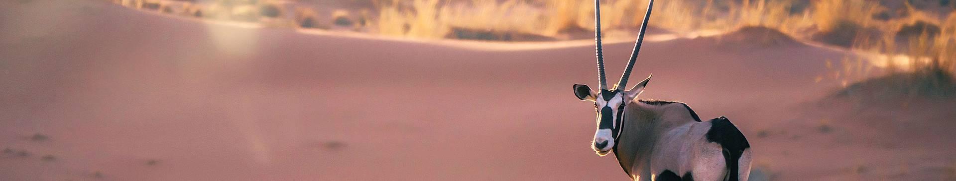 Viajes al desierto de Namibia