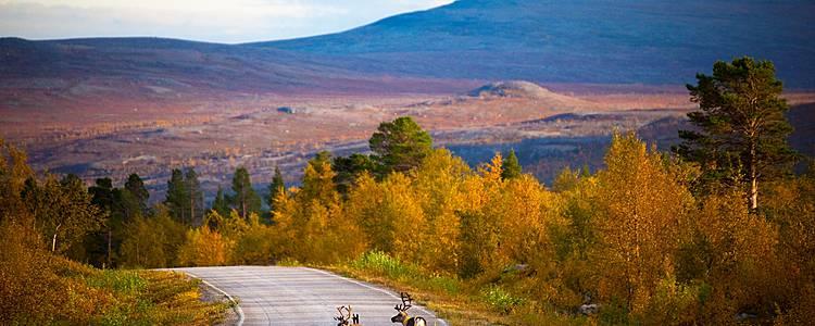 Klassische Gruppenreise im herbstlichen Lappland und Helsinki