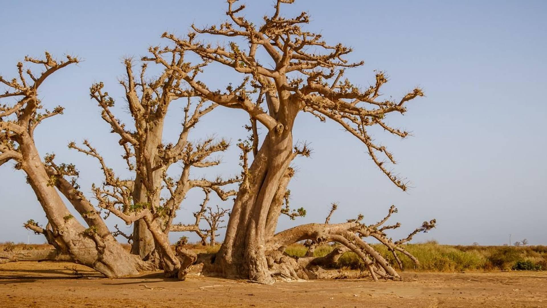 Escapade entre nature et traditions