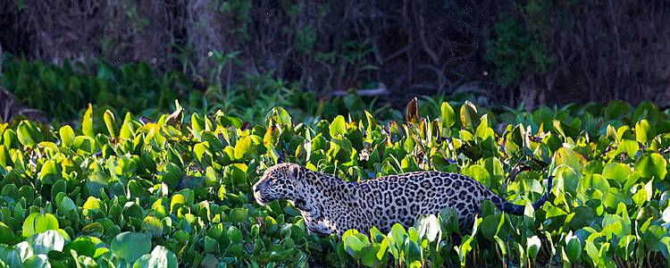 Le capitali Storiche ed il regno del giaguaro