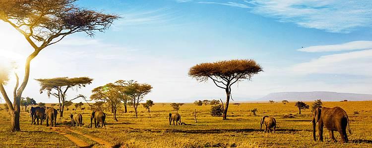 Experiencia Safari en Tanzania