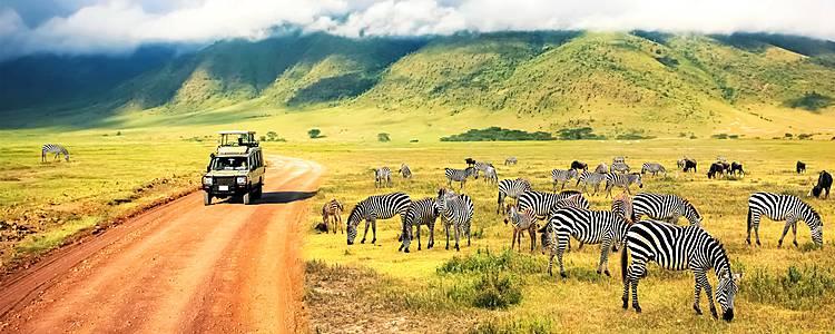 Safari confort en los mejores parques de Tanzania