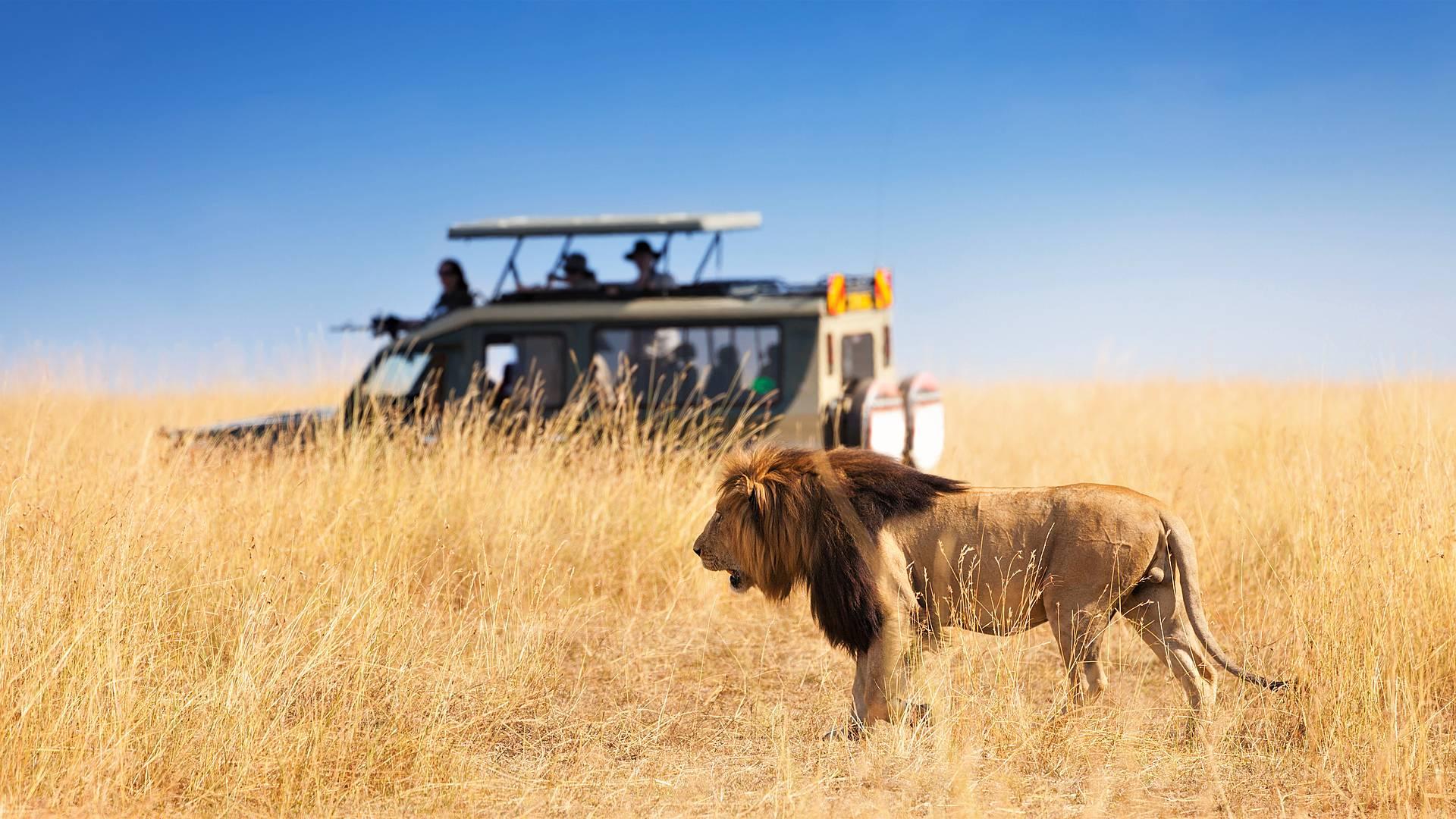 Safari de Lujo en el Norte del País