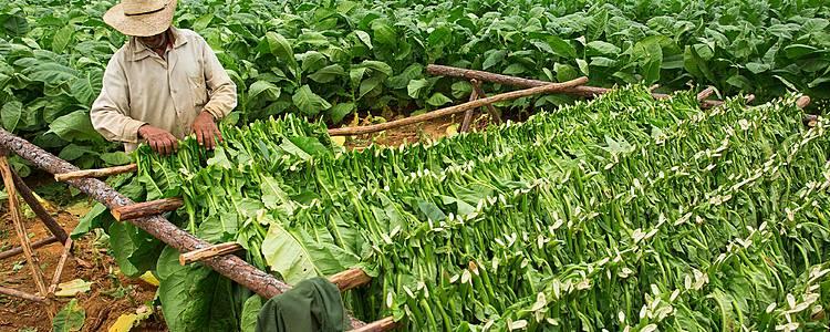 Ruta del tabaco e mare a Cayo Largo