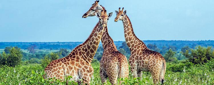 Ruta Ubuntu y Fauna Salvaje de Kruger