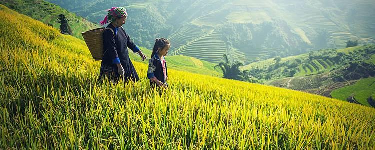 Combiné Laos Vietnam, Ethnies du nord et rizières en terrasse