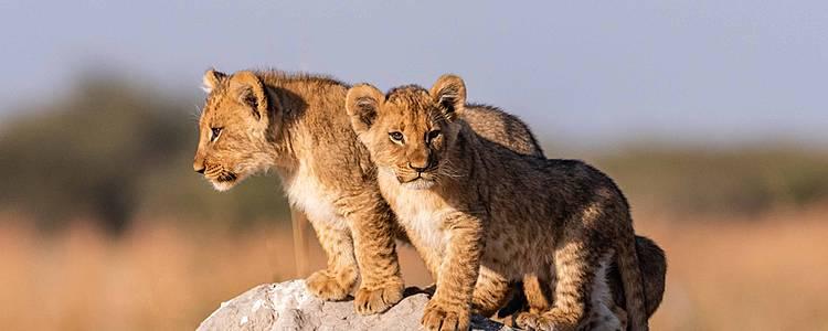 Explorez le Botswana en famille !