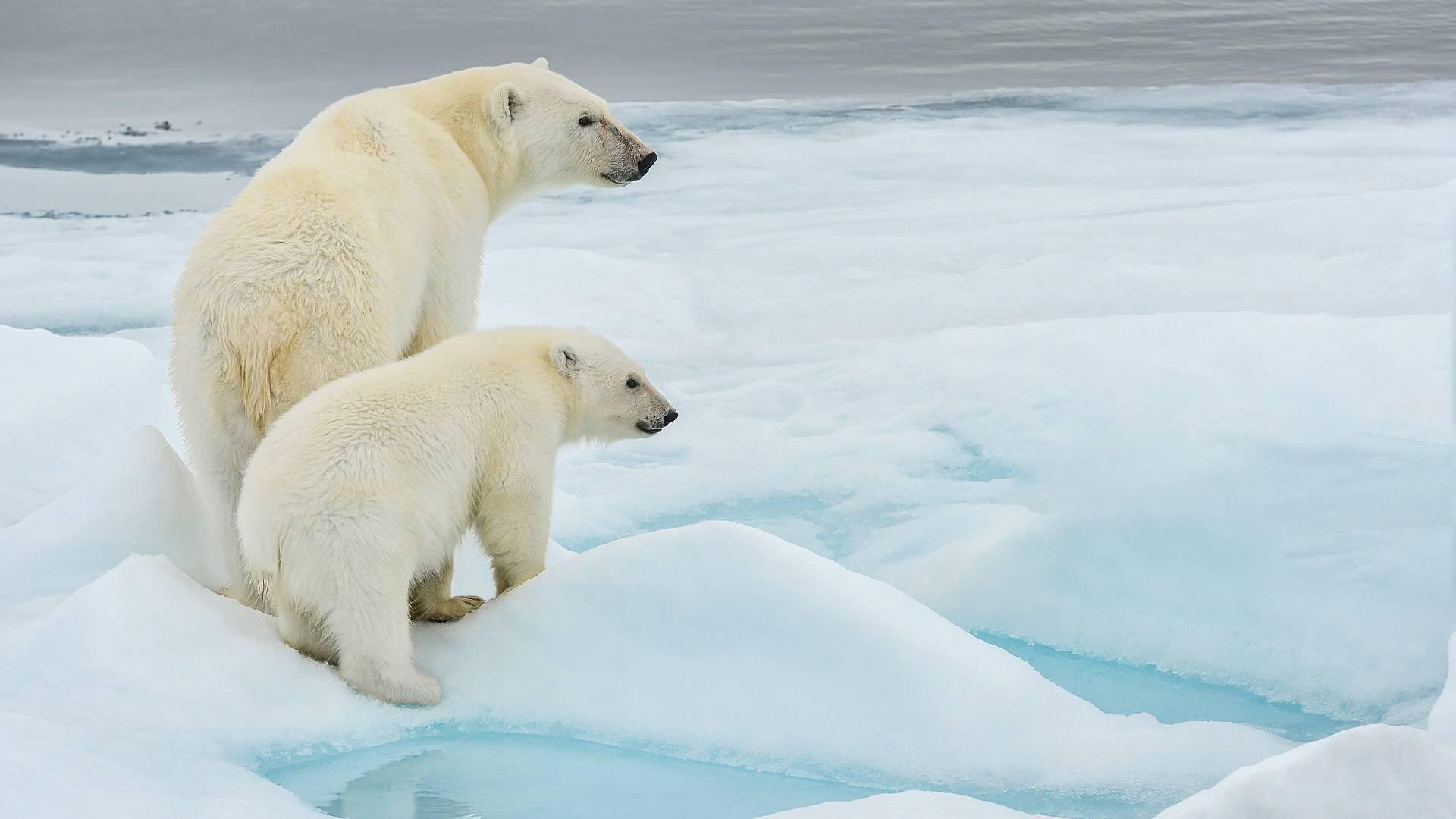 Esplorazione al polo nord in inverno: Isole Svalbard