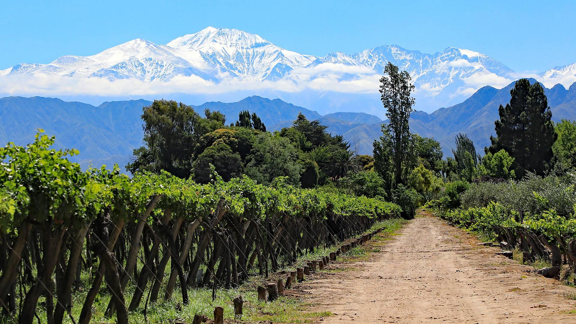 Le vette andine di Argentina, Bolivia e Cile