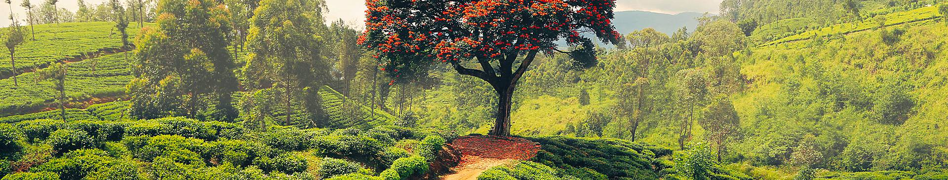 Naturreisen Sri Lanka