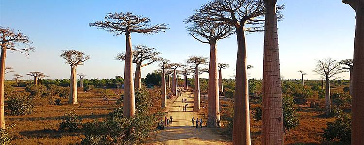 El gran tour de Madagascar