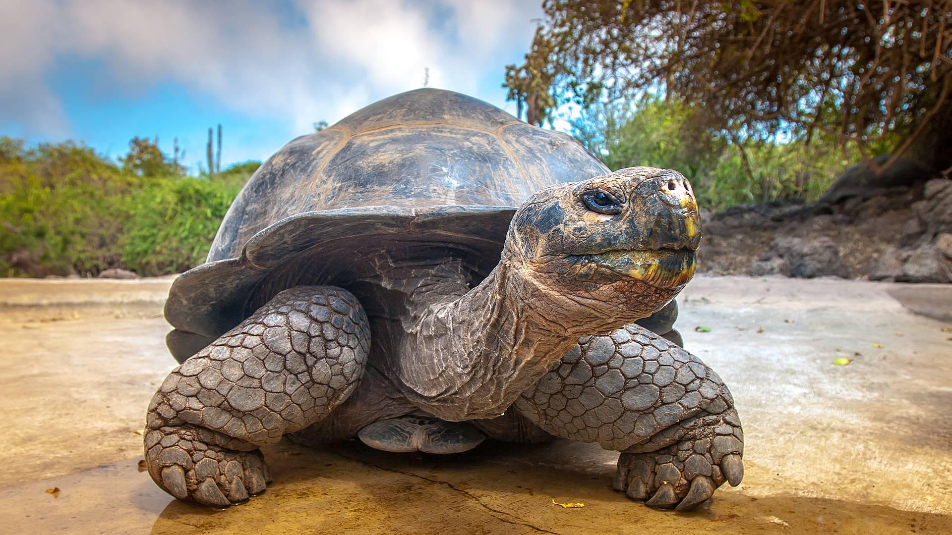 Naturparadies Galapagos - Von Riesenschildkröten und weissen Traumstränden