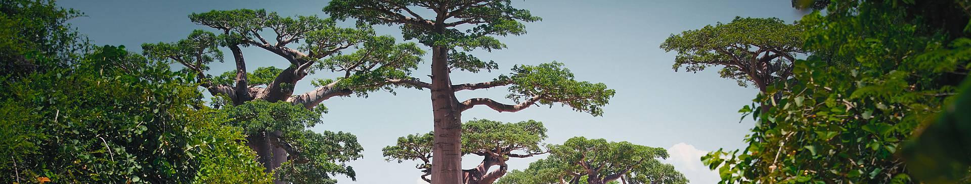 Naturreisen Madagaskar