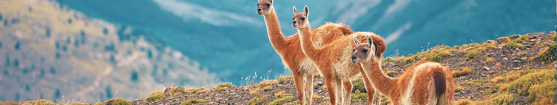 Naturreisen Patagonien
