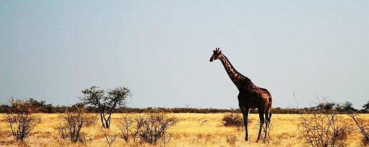 Die wilde Schönheit Afrikas entdecken!