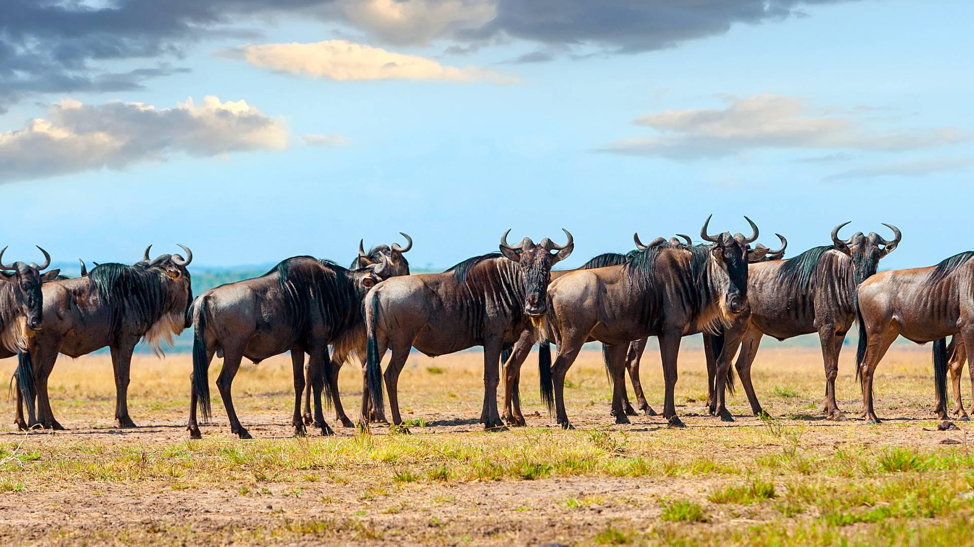 Vive las migraciones en el Parque Nacional Serengueti