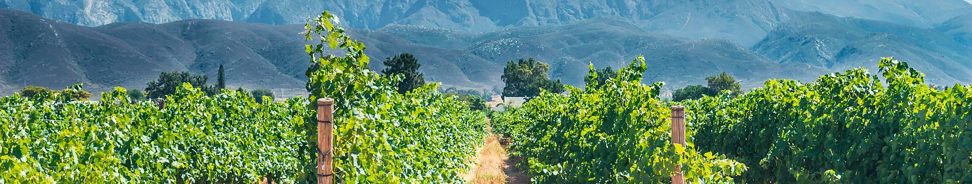 Rutas gastronómicas y enológicas por Sudáfrica