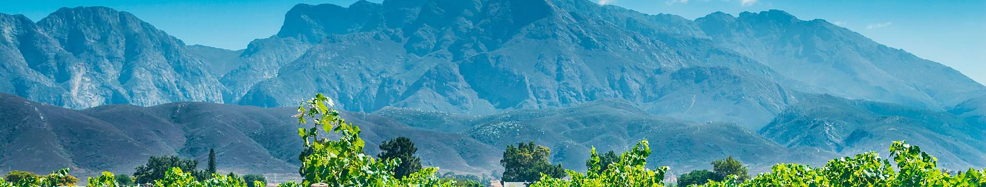 Viaggi enogastronomici in Sudafrica