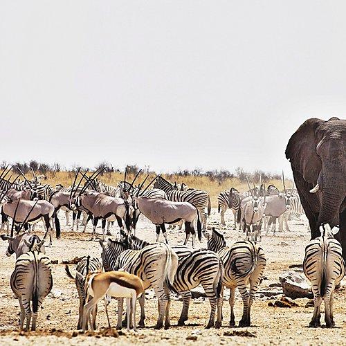 Au coeur des parcs et déserts du Nord - Ouest - Windhoek -