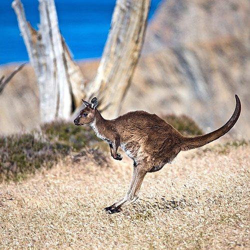 De la côte Est à l'Outback : Sydney , Cairns, Alice Springs et Adélaïde -