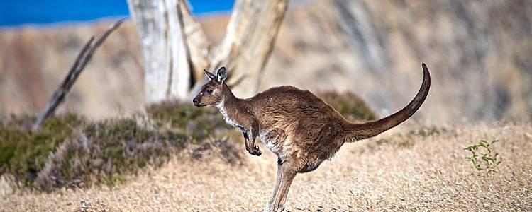 De la côte Est à l'Outback : Sydney , Cairns, Alice Springs et Adélaïde