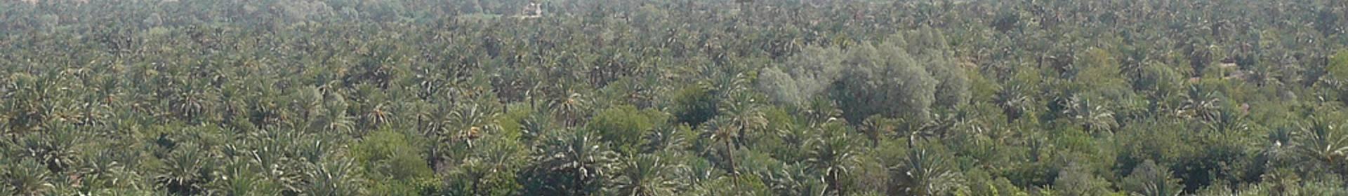 Vallée de Tazegzaoute