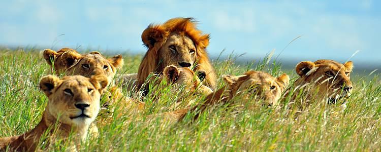 Safari e relax a Zanzibar Speciale Estate