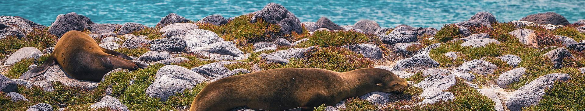 Rondreis 2 weken in de Galapagos eilanden