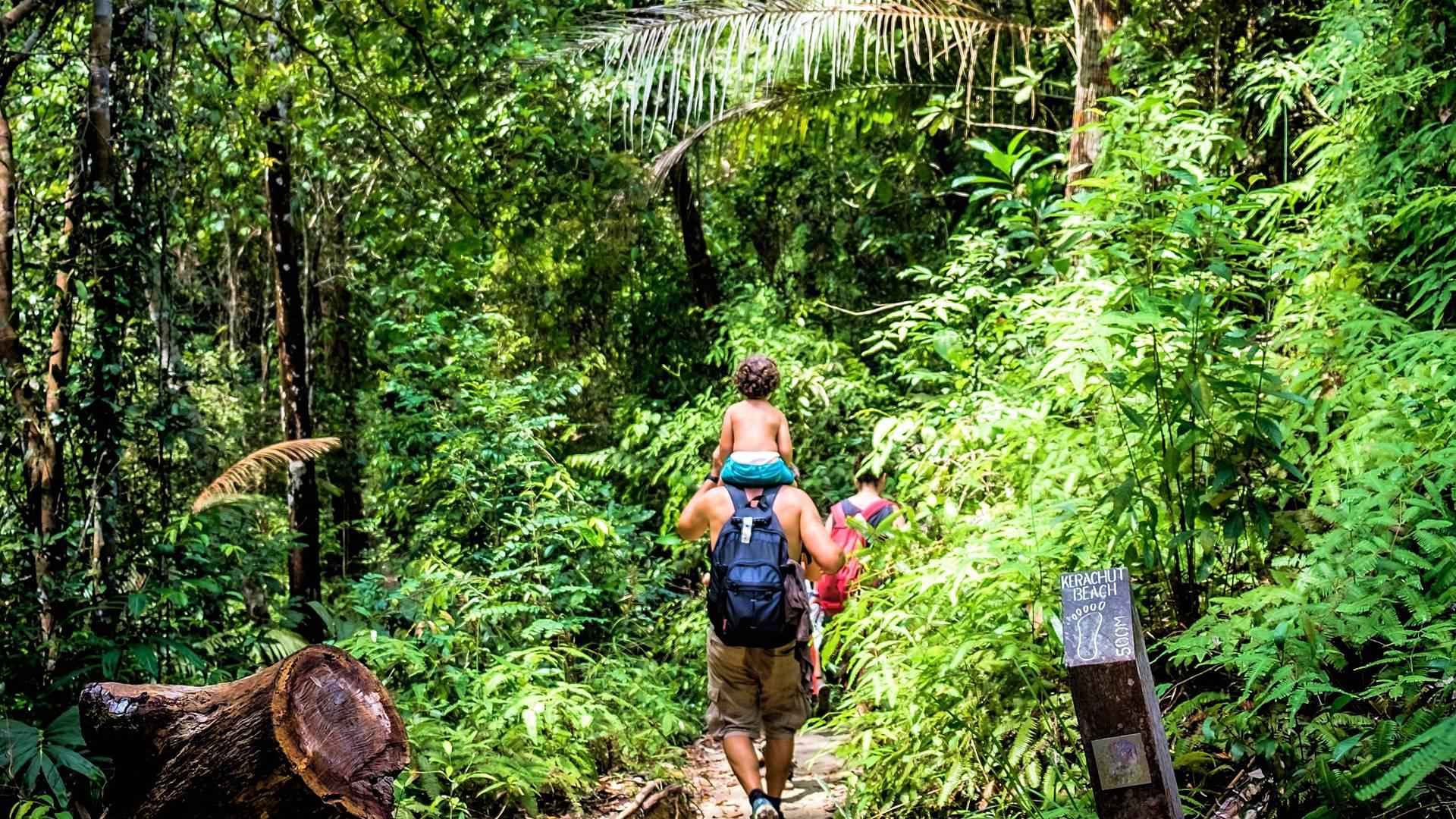 Aventura en la selva del Norte de Sumatra