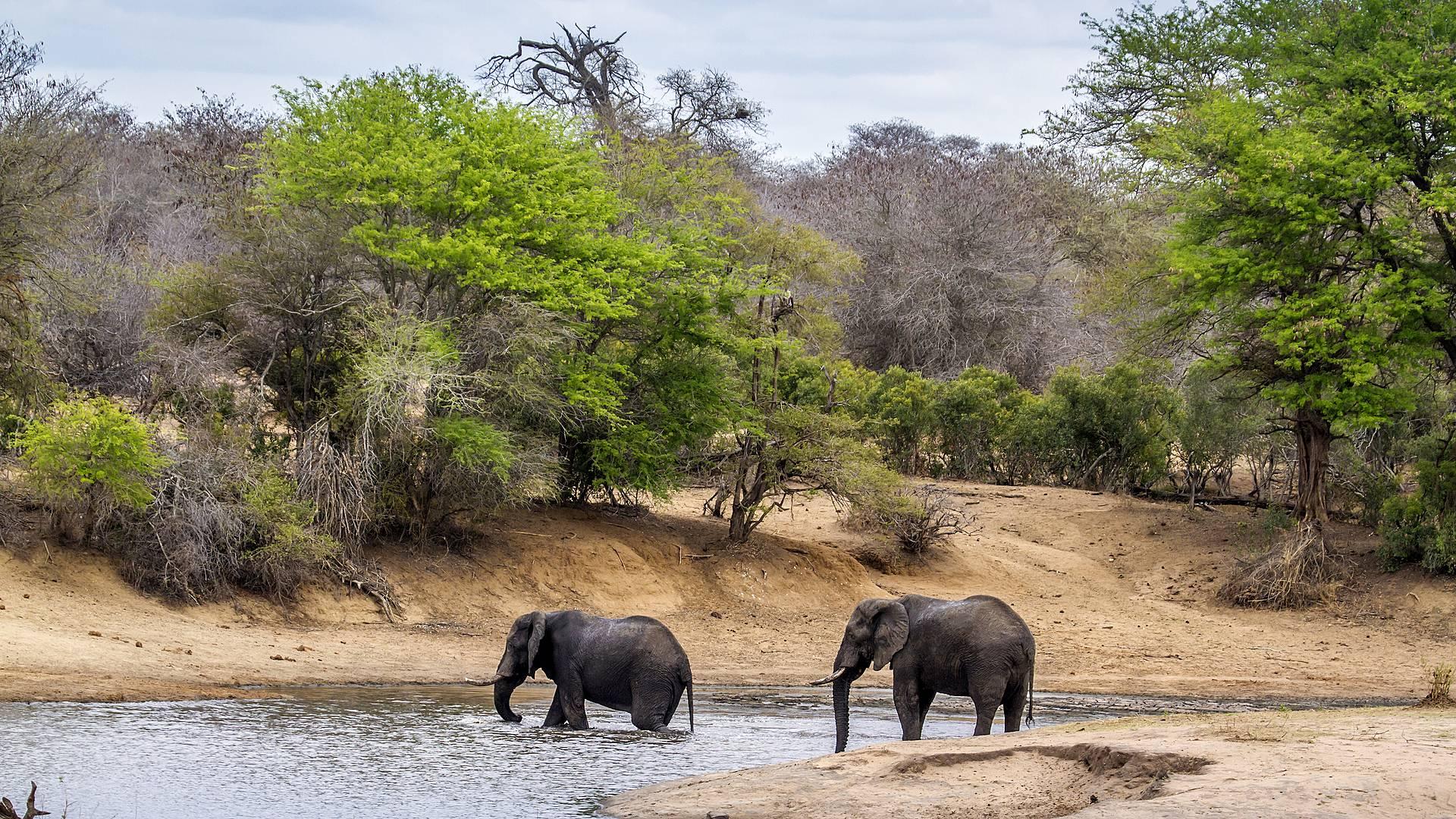 Weiße Strände und Big Fives in Südafrika und Mosambik