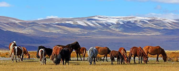 Adventure trip in Mongolia