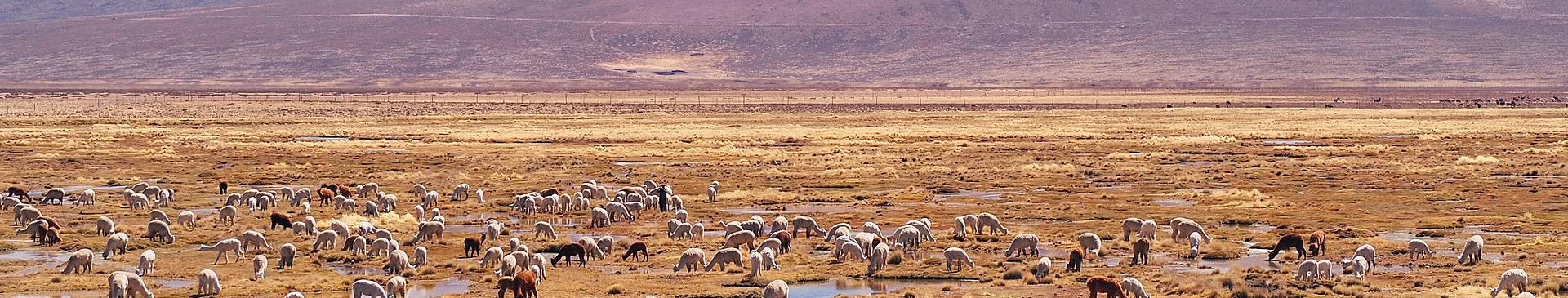 Viaggi nel deserto in Perù