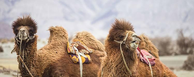 Nomadic Mongolia In Comfort