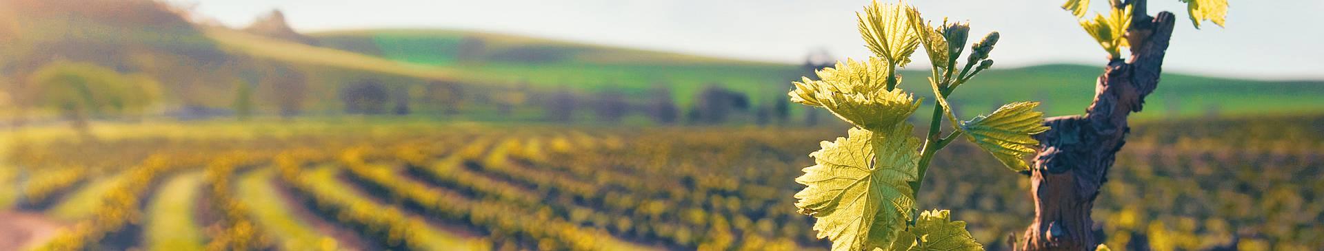 Australia food and wine