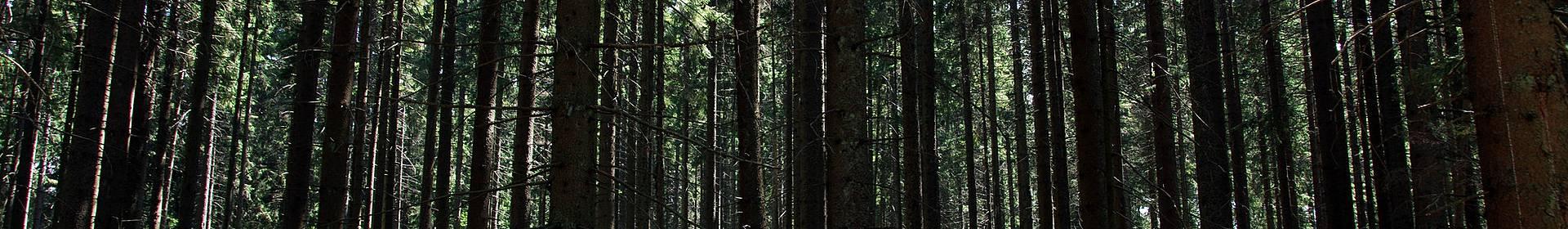 Forêt de Bohème