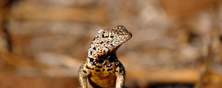 Terre de Feu et Lézards de lave aux Galapagos
