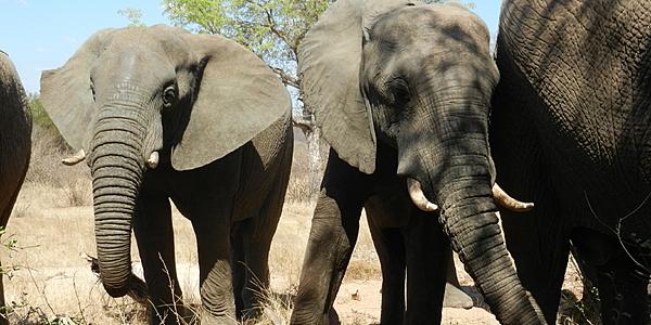 Los safaris son la joya de la corona del turismo y la economía