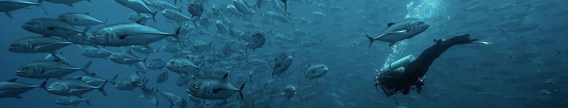 Columbia scuba diving