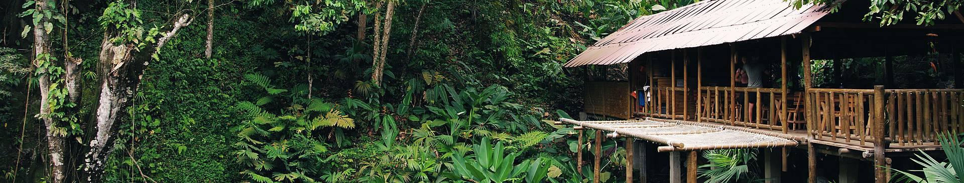 Columbia rainforest