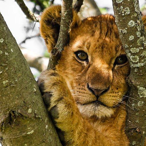 Rencontres et safaris avec ma tribu - Arusha -