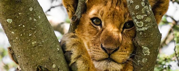 Rencontres et safaris avec ma tribu