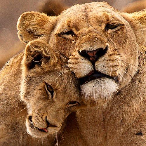 Safaris et grands espaces -