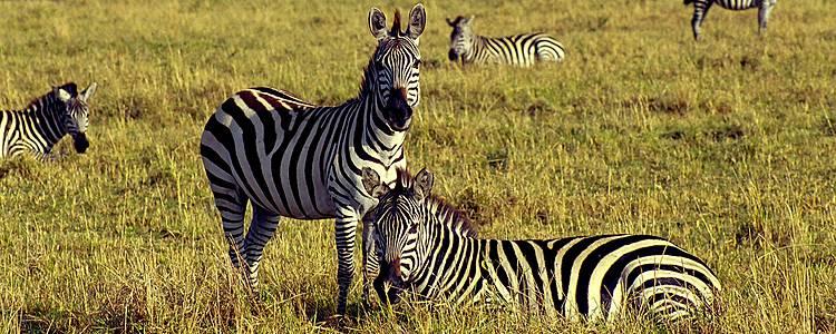 2020 Kichwa Safari