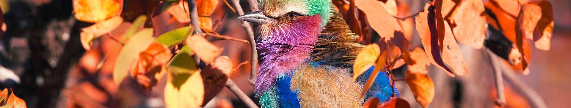 Bird watching in South Africa